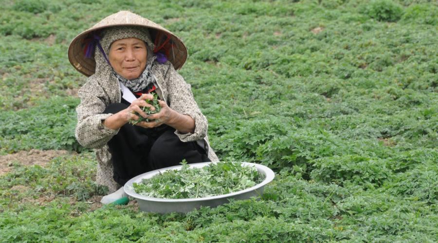 lavoro quotidiano in Vietnam