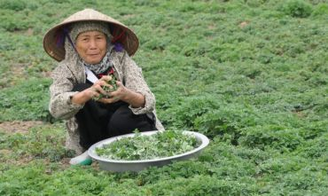 Tour di Gruppo Magica Indocina - 12 giorni tra il Vietnam con Tam Coc e la Cambogia con Banteay Srei