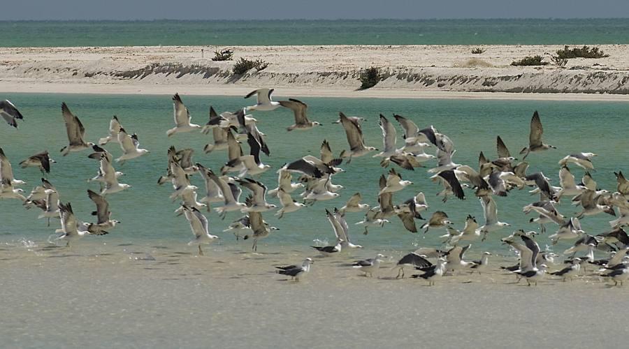 ...sulla spiaggia di Salalah