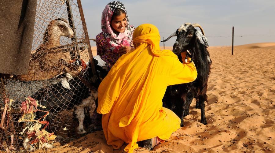 Vita e popolo beduino