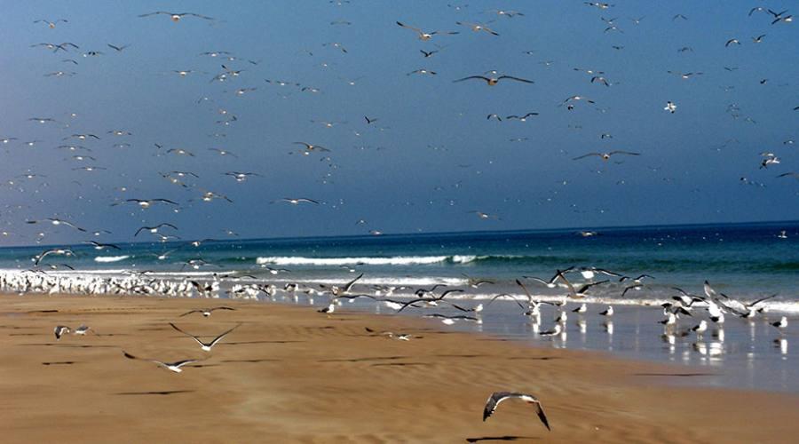 Khaluf - la spiaggia