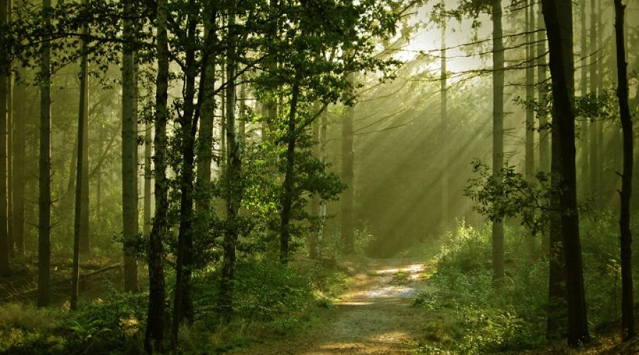 Foresta polacca