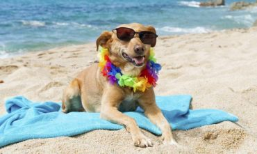 Aparthotel pet-friendly a pochi passi dal mare