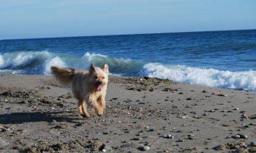 Hotel 3 stelle sul mare con spiaggia convenzionata pet-friendly