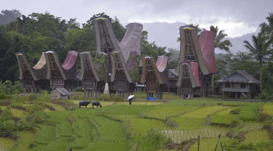 Le abitazioni tipiche della Terra di Toraja