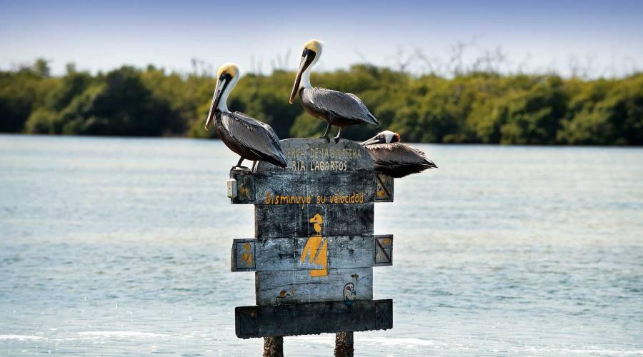 Escursioni: Rio Lagartos (Yucatan)