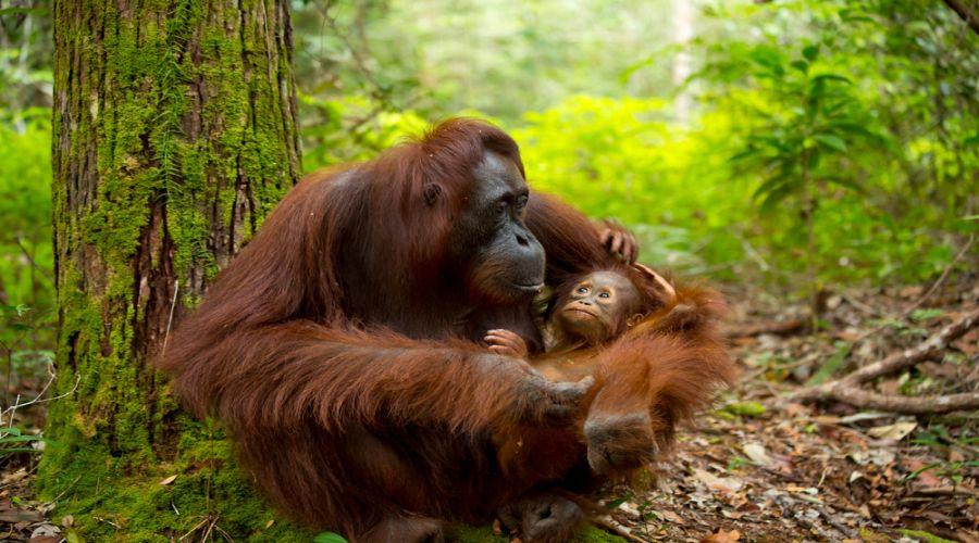 Animali della zona di Indonesia