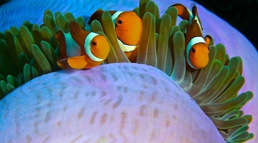 La vita sottomarina
