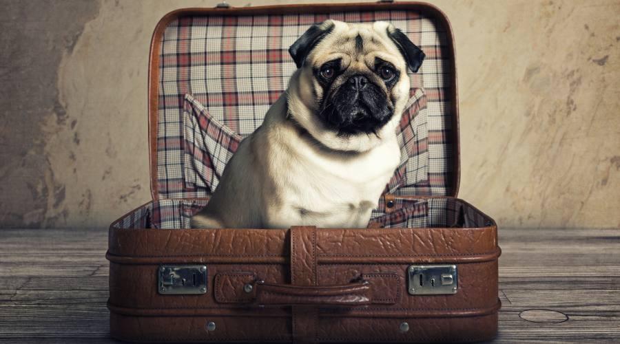 Facciamo le valigie