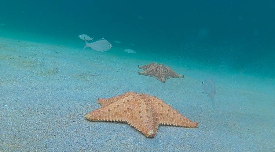 Bocas del Toro - Playa Estrella