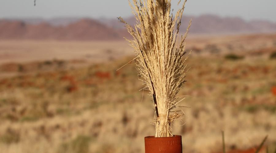 namib rand reserve