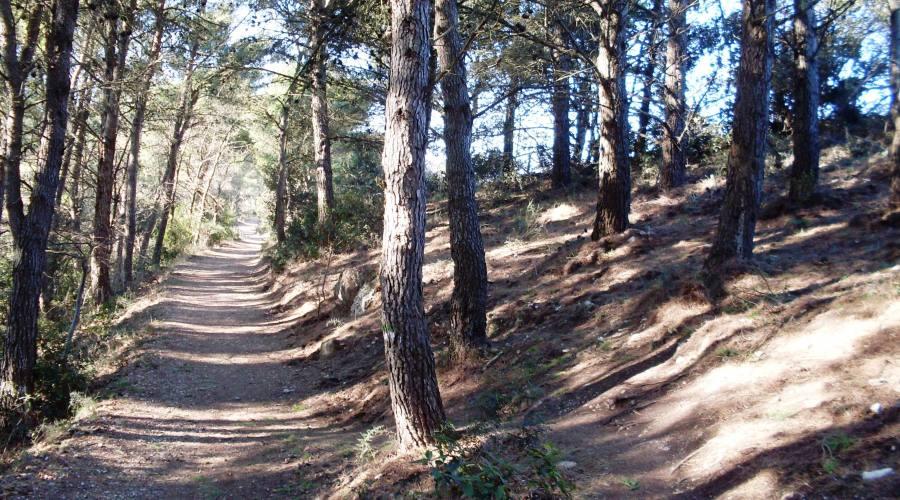 Monte Conero, sentiero verso Pian Grande