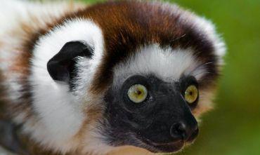 Alla scoperta di lemuri e camaleonti