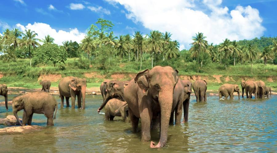 Sri Lanka Pinnawala Elephant Orfanage