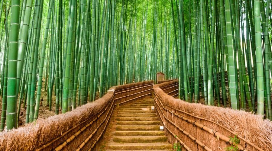 La foresta di bamboo a Kyoto