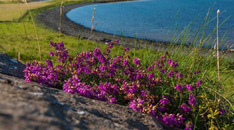 Skye coral beach