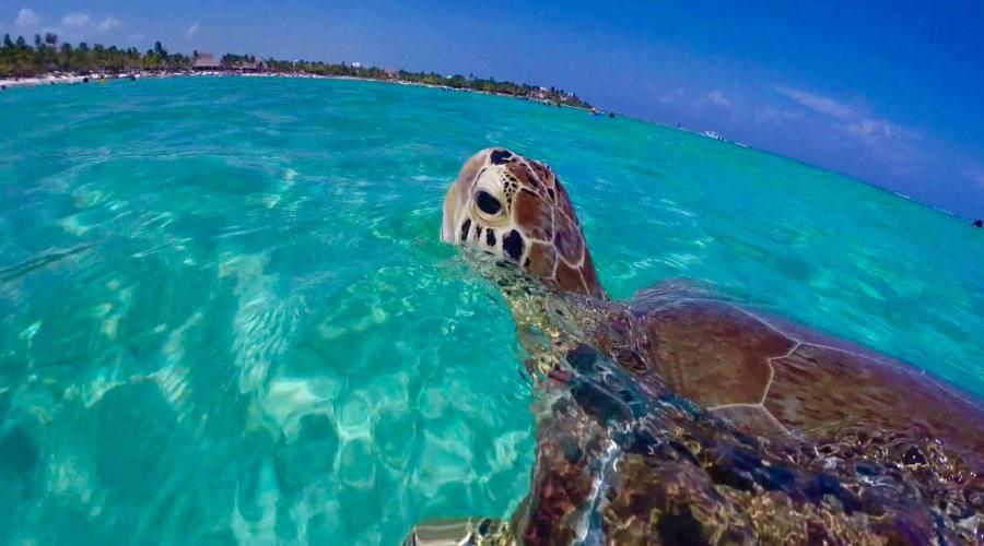 Escursioni: Snorkeling con le Tartarughe