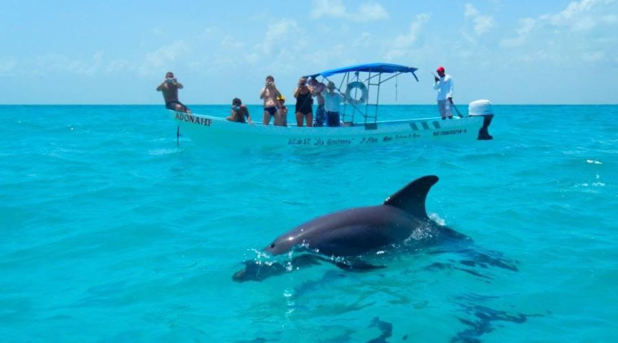 Escursioni: Delfini, Tartarughe e Dugonghi nella Biosfera di Sian Ka'an