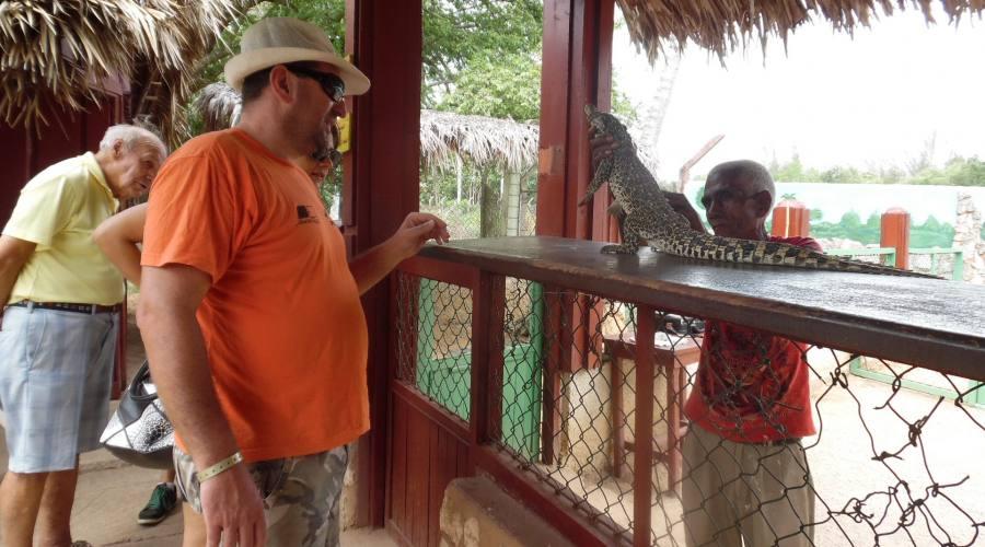 Allevamento di Coccodrilli a Cuba