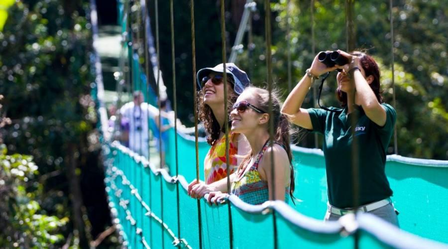 Passerella sospesa sulla volta della foresta: riserva di Monteverde