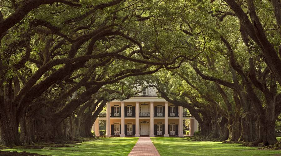 Oak Plantation