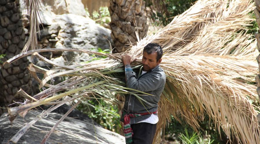 Misfat - lavori nei palmeti