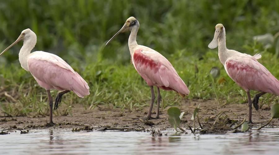 Gran Tour: Pantanal