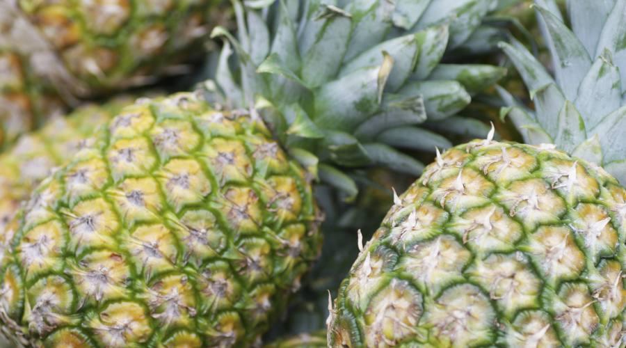 Ananas prodotto in Costa Rica