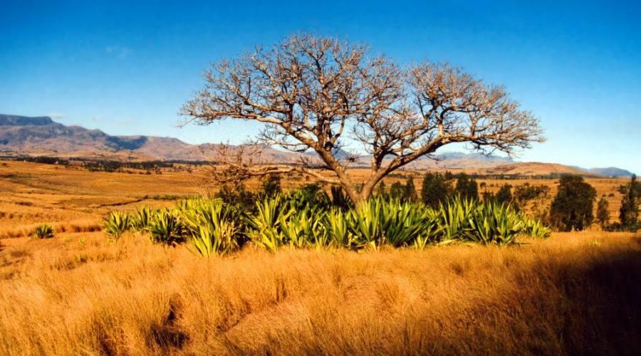 Savana di Madagascar