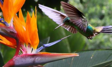 Panama, Nicaragua e natura costaricense