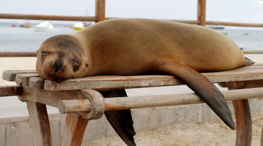 Leone di mare.. buona dormita!
