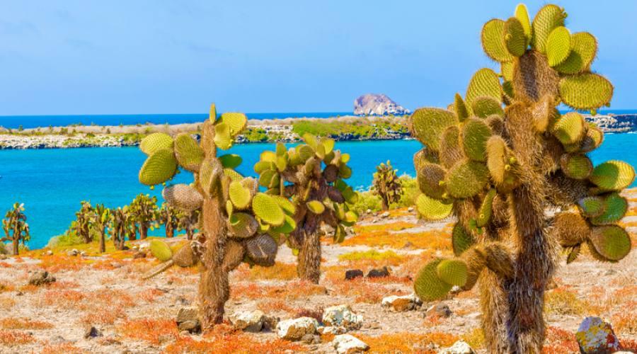 Cactus e oceano a Santa Cruz
