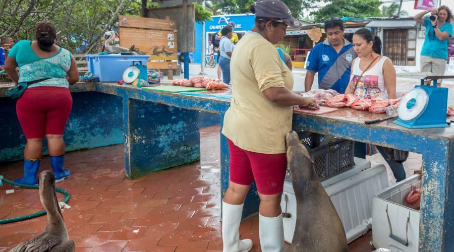 Mercato del pesce, Santa Cruz