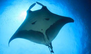 Fly, Drive & Dive: Playa del Coco
