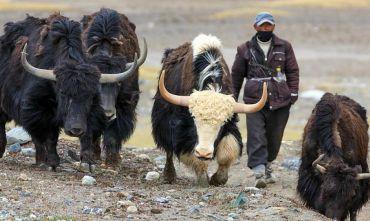 Attraverso l'autostrada del Pamir fino alle yurte ed ai nomadi del Kyrgyzstan