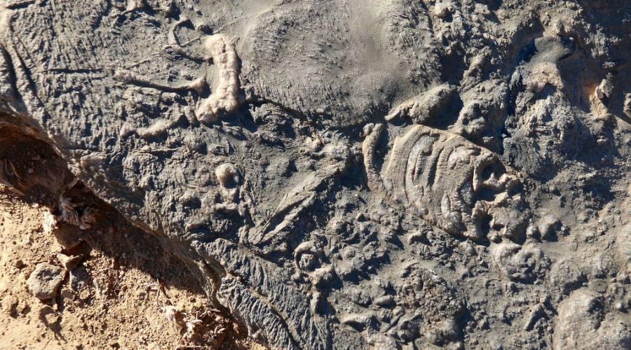 fossili a Jabal Karim