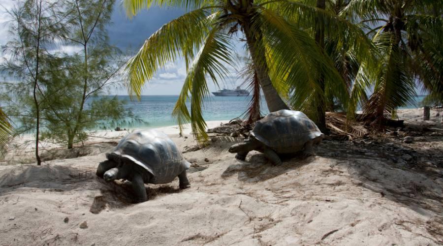 Seychelles tartarughe giganti