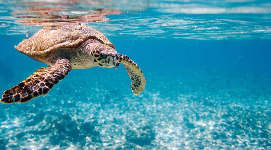 Seychelles tartaruga di mare