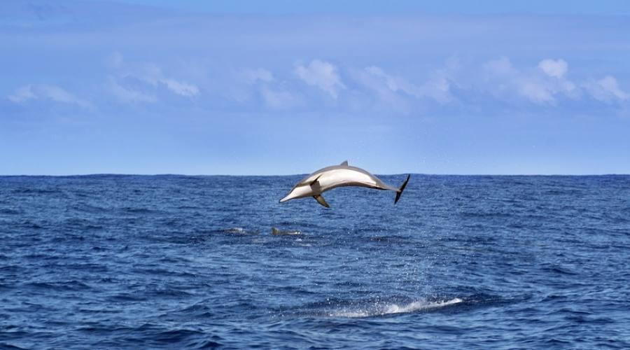 Delfino nel Mar Grande