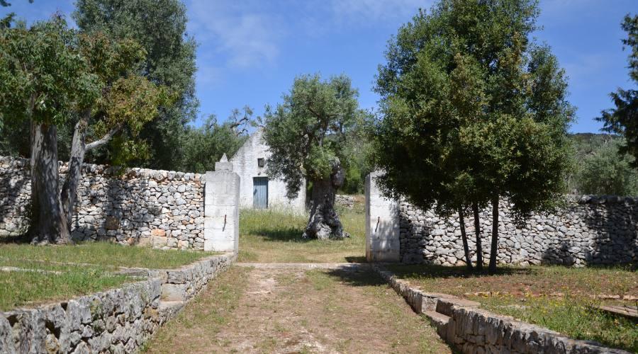 Uliveto in Masseria
