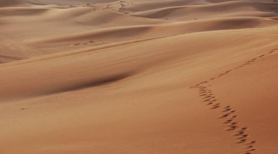 Dubaï : marchez dans le désert