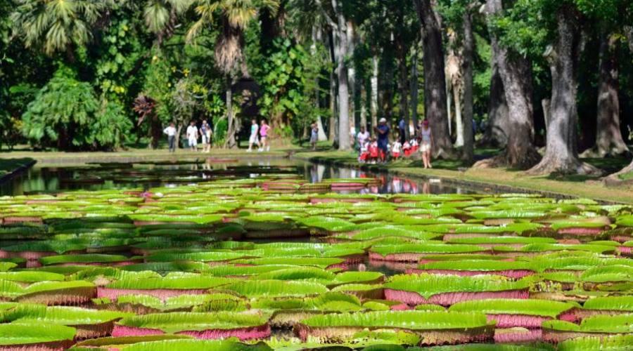 Les jardins de Pamplemousses