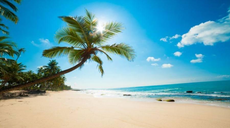 palmiers sur l'île
