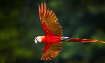 A tutta Natura: viaggio nel Parco nazionale Manu!