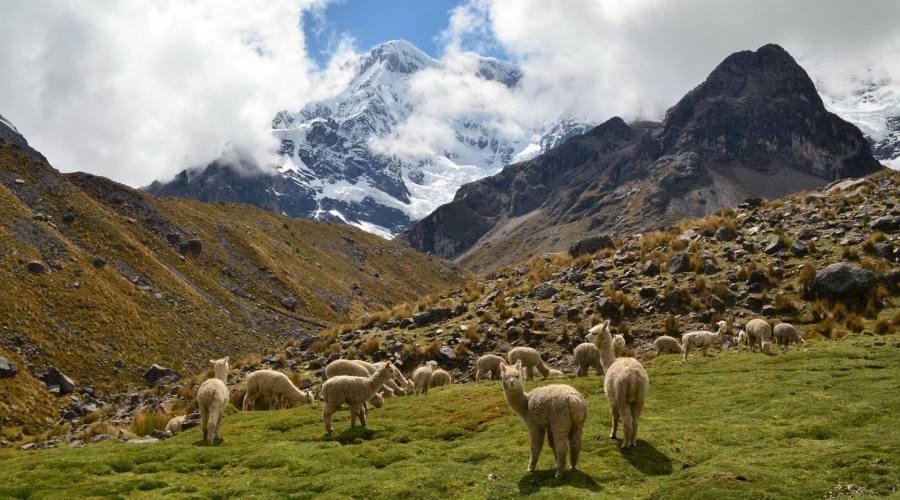 Alpache e il monte Ausangate