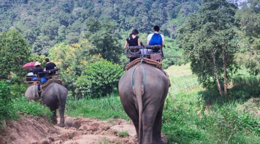 Trekking avec les éléphants