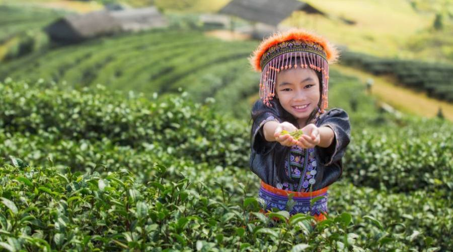 Enfant dans un champ de thé à Chiang Mai
