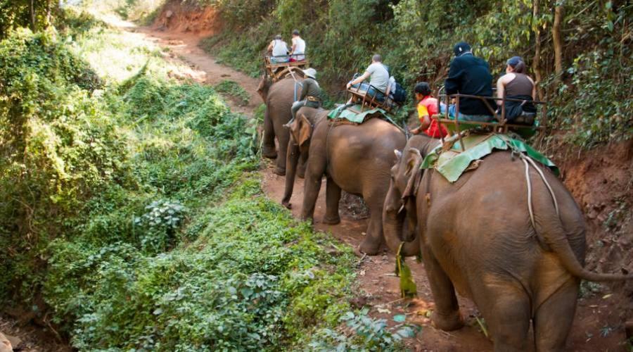 Trekking d'éléphant