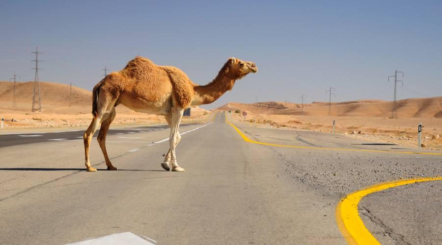 Israele Deserto