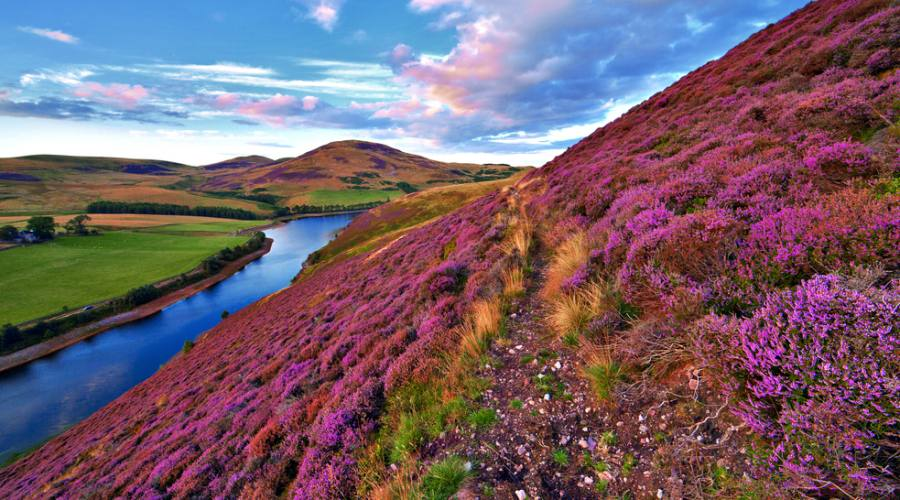 Valli scozzesi con erica